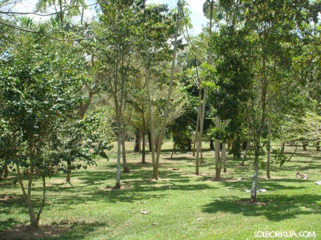 36 especies de árboles nativos y endémicos